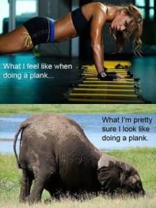 plank comparison